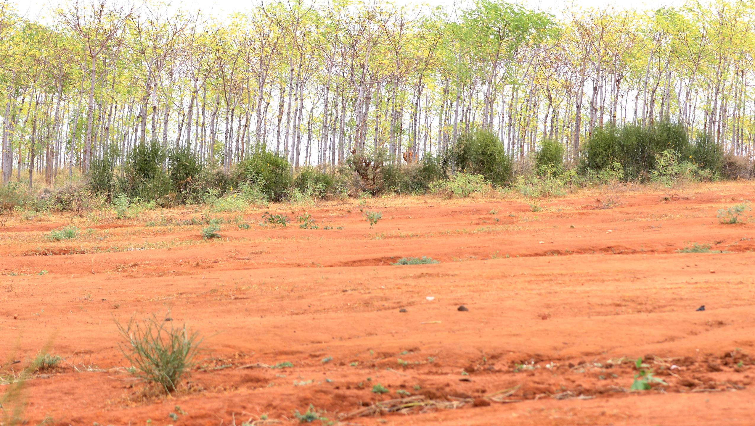 Planting Trees in the Semi-desert