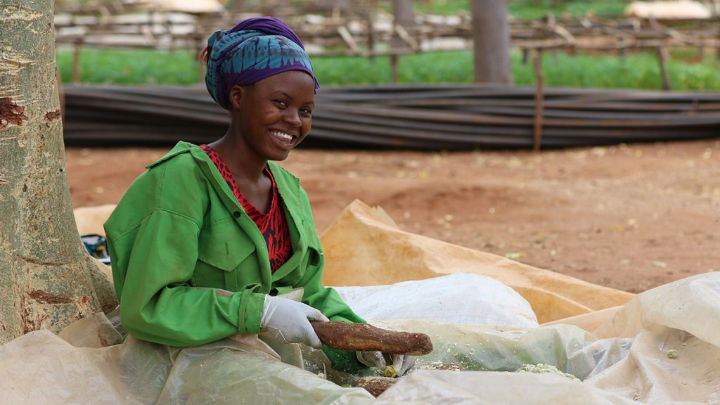One of our employees, Philomena Wayua, removes the pulp from the Mukau fruit to bring out the hard nut. The nut is then dried. 170704