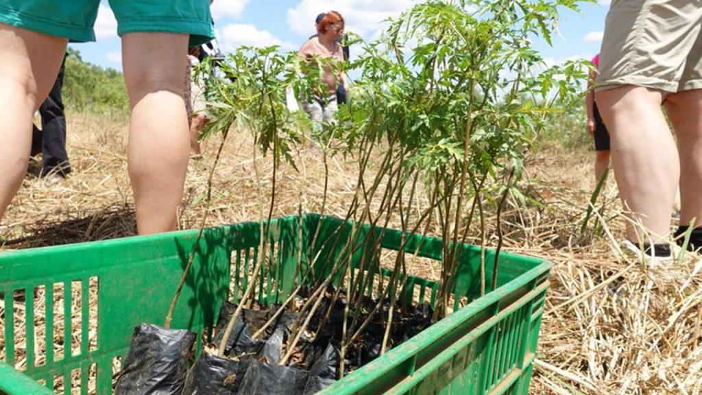 Todos los clientes tienen que plantar su propio árbol. 180628