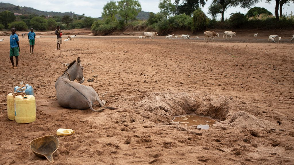 A water hole in a dehydrated river bed, Kenya. July 2018.
