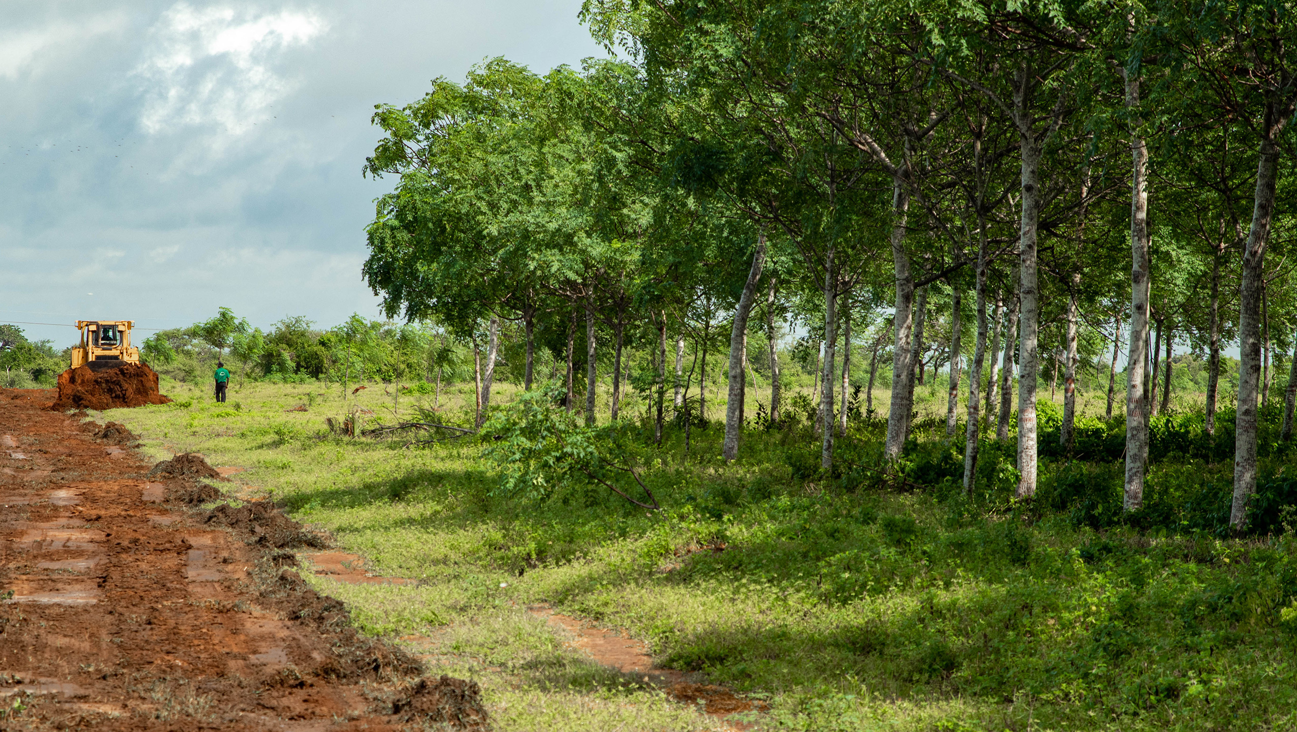Tree-planting reduces the climate threat